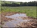 ST0116 : Flies and puddles near Stoney Lane Cross by Derek Harper