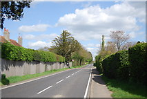 TQ8115 : The A28, Westfield by N Chadwick