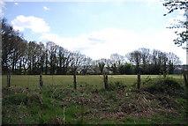 TQ8115 : Westfield Cricket Ground by N Chadwick