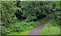 J3370 : Path, Lagan Meadows, Belfast by Albert Bridge