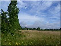 TQ4968 : Field edge near Hockenden by Marathon