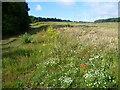 TQ4869 : Field edge seen from Chapmans Lane by Marathon