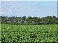 TM1535 : Farmland near Alton Water by Roger Jones