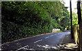 J3975 : The Glenmachan Road, Belfast by Albert Bridge
