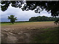 TM4259 : Field next to the entrance to Park Farm & Park House by Geographer