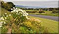 D4500 : Floral display, Islandmagee by Albert Bridge
