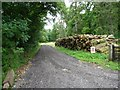 SP0712 : Log pile along woodland track by Christine Johnstone