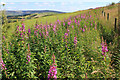 SD9706 : Summer on High Moor by Michael Fox