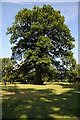 SP9732 : Oak tree in gardens at Woburn Abbey by Philip Halling