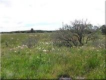 G7783 : Meenacloy Townland by Kenneth  Allen