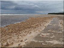 NJ0064 : Culbin Beach by Alan Hodgson