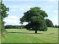 TL4401 : Path through a field near Epping by Malc McDonald