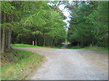 NX4465 : A junction in the forest by Ann Cook