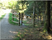 NX4465 : A gateway on the Kirroughtree Lade Trail by Ann Cook