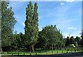 TQ3763 : Trees alongside Lodge Lane by Stephen Craven