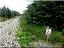 G7878 : Forest road, Drumadart by Kenneth  Allen