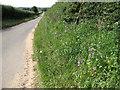 TF8640 : Wild flowers beside the lane to Burnham Thorpe by Evelyn Simak