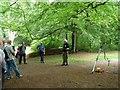 SE1426 : Archaeology Walk, Judy Woods by Christine Johnstone