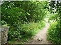SE1427 : Sowden Lane, Judy Woods by Christine Johnstone