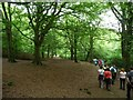 SE1426 : Walking under the beeches, Judy Woods by Christine Johnstone