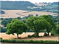 SE2614 : Trees on field boundary by Christine Johnstone