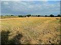 SO7729 : Barley crop mid-harvest by Jonathan Billinger