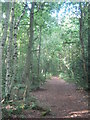 TQ4568 : Path in Willet Memorial Wood by David Anstiss