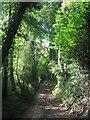 TQ4761 : Bridleway to Port Hill by David Anstiss