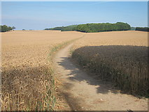 TR0047 : Pilgrims' Way by Oast House Archive