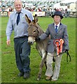 NX4254 : Grand Parade of Prize Livestock by Andy Farrington