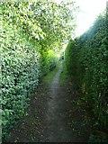 SE0026 : Hebden Royd Footpath 47 between garden hedges, Mytholmroyd by Humphrey Bolton
