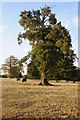 SO8943 : Trees beside a footpath to Croome Park by Philip Halling