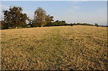 SO8843 : Field near Dunstall Common by Philip Halling