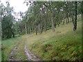 NJ1542 : Birch woods near Leakin by Dorothy Carse
