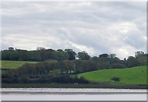 G2625 : Eastern shore of the River Moy by C Michael Hogan