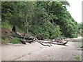 TM1333 : Trees on the shore by Roger Jones