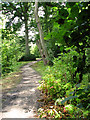 TG3613 : Path in Fairhaven Water garden, South Walsham by Evelyn Simak