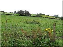 H6059 : Shantavny Scotch Townland by Kenneth  Allen