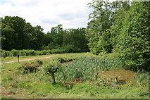 TQ1661 : Upper Gravel Pond by Hugh Craddock