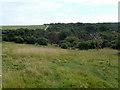TQ5401 : Lullington Heath National Nature Reserve by Robin Webster