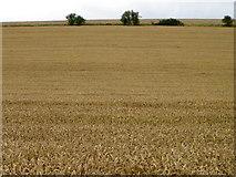 SU1872 : Arable fields near Ogbourne St Andrew by Maigheach-gheal