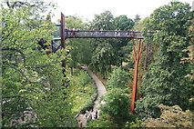 TQ1876 : The treetop walkway by Bill Boaden