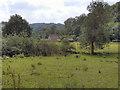 SE5784 : Rye Valley by David Dixon