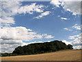 TG0643 : Crockley's Plantation, Cley by Evelyn Simak