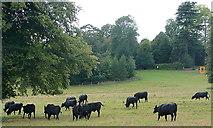 SU8695 : Art at Hughenden Park (7) by Graham Horn