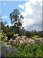 NS3478 : Herbaceous border, Geilston Garden by Carol Walker