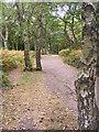 SO8282 : Kinver Ridge Path by Gordon Griffiths