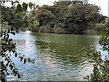 SU8712 : Lake -Singleton by Paul Gillett