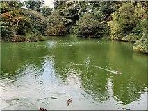 SU8712 : Lake - Singleton by Paul Gillett