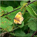 SU0292 : Butterfly and nettles, Rigsby's Lane, Minety by Brian Robert Marshall